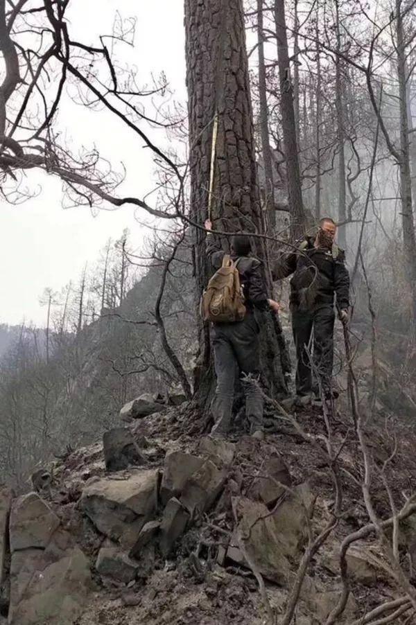 凉山冕宁发生火灾怎么回事 为何森林火灾频发?