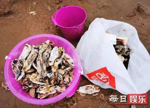 青岛市民捡海鲜是什么情况 海鲜为什么全跑岸上来了?