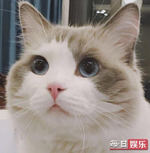 被猫咪抓伤险丧命是怎么回事 生活中被猫抓伤后该怎么做?